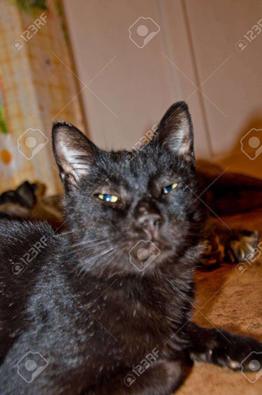Black Cat With Yellow Eyes Funny Face Selective Focus Stock Photo Picture And Royalty Free Image Image 104102557