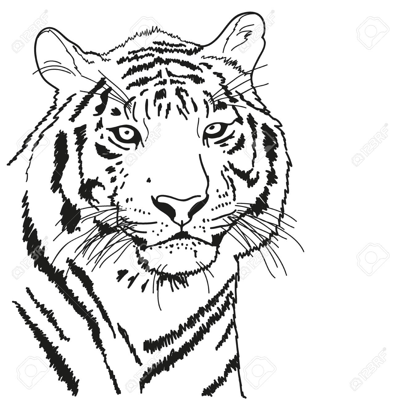 Tiger Drawn With A Black Outline Coloring Book