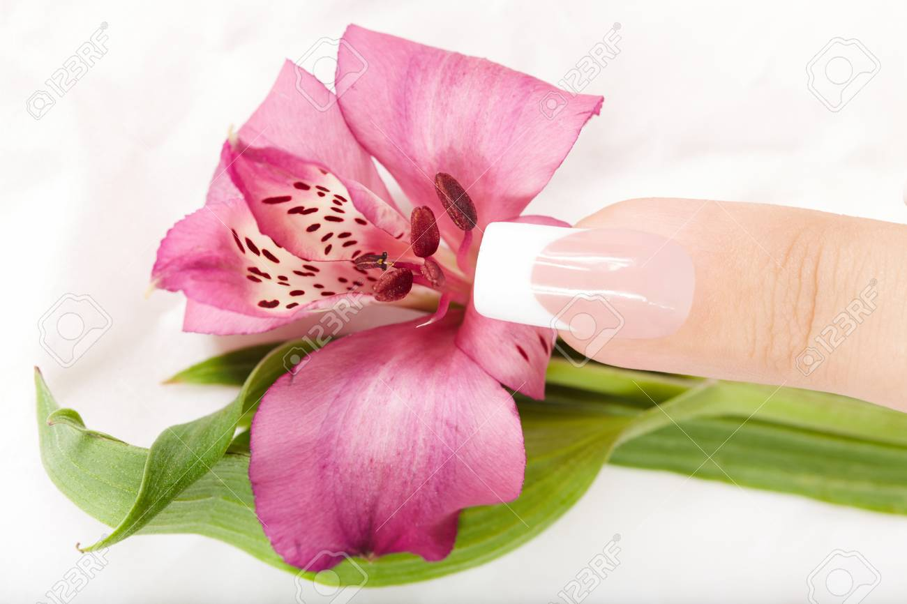 Finger With Long Artificial French Manicure And Alstroemeria Stock