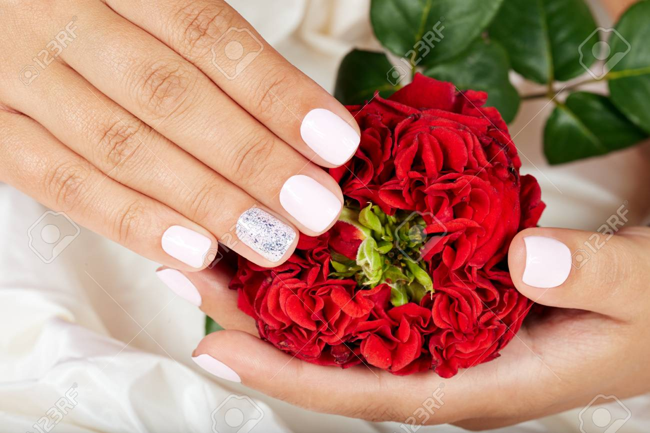 Hands with short manicured nails colored with white nail polish hands with short manicured nails colored with white nail polish holding a red rose flower stock izmirmasajfo