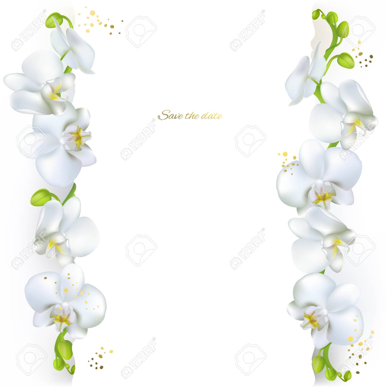 White Orchids Tropical Flowers Exotic Plants Floral Background