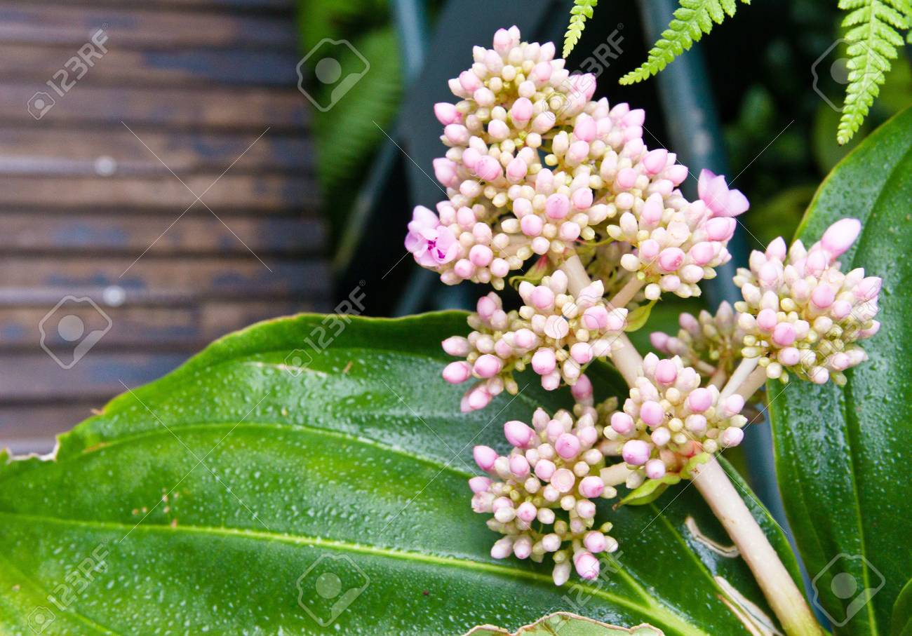 A Bunch Of Small Pink And White Flowers Stock Photo Picture And