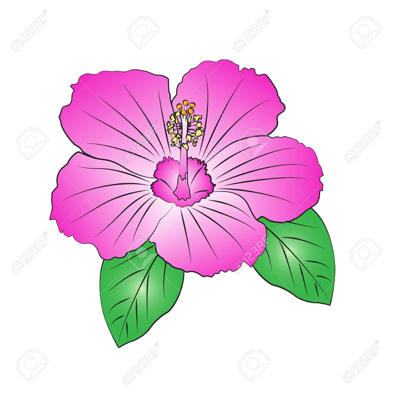 Vector Cartoon Hibiscus On White Background Royalty Free Cliparts