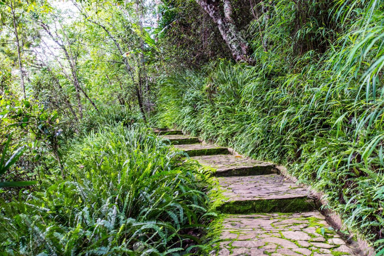 Tropical Rainforest Garden At Chiangrai Thailand Stock Photo