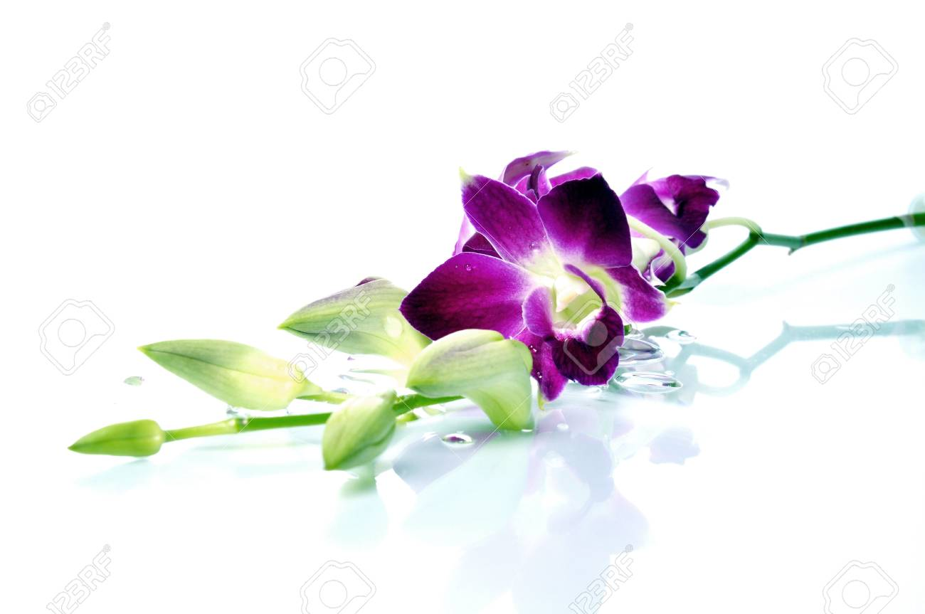A beautiful orchid and water drop with isolated white background. Stock Photo - 9341744