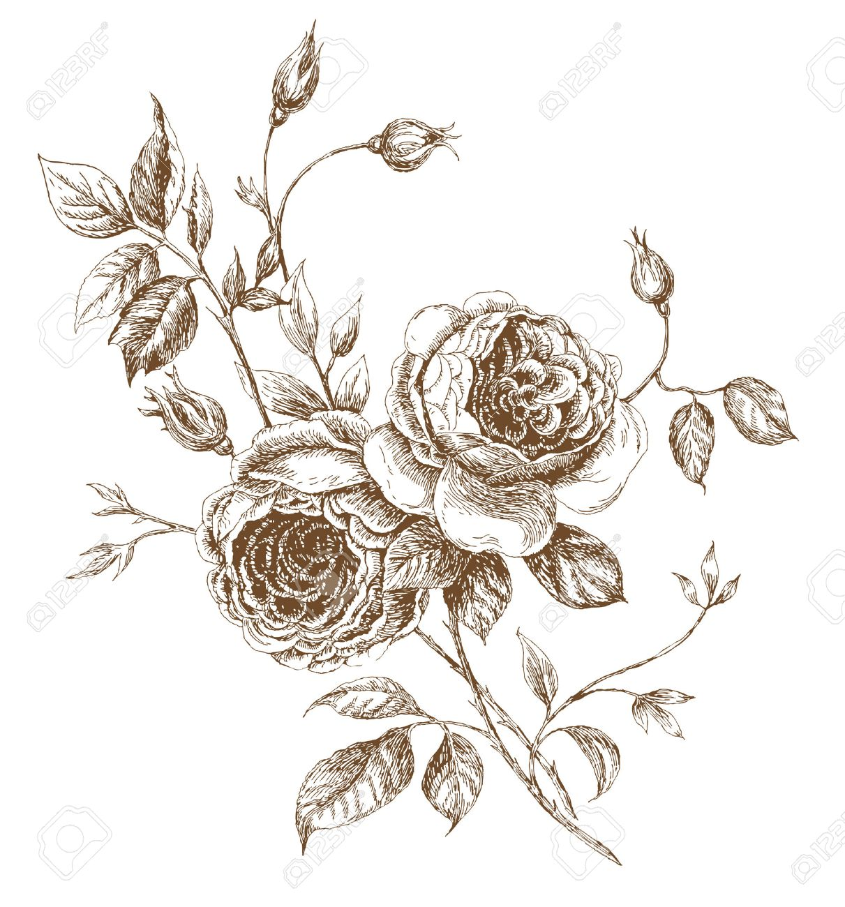 old styled vector rose trace of freehand drawing stock vector 6001169