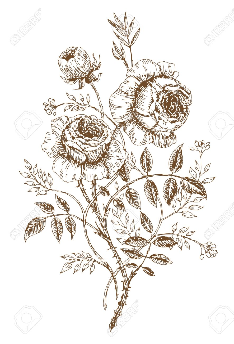old styled vector rose trace of freehand drawing stock vector 6063527