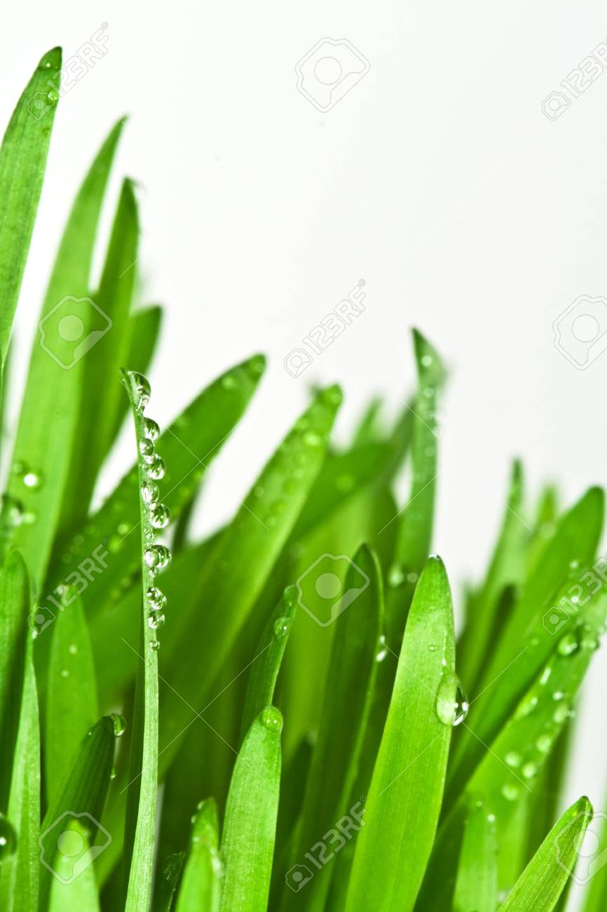 Green grass isolated on white background Stock Photo - 3102697