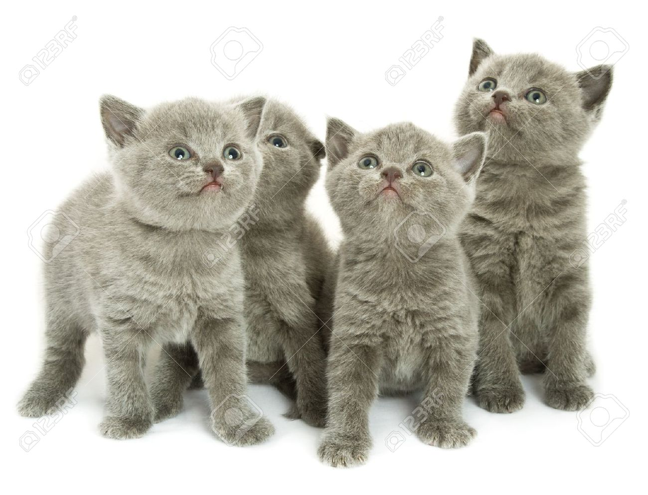 Four small funny kittens. Isolated on white background Stock Photo - 4171472