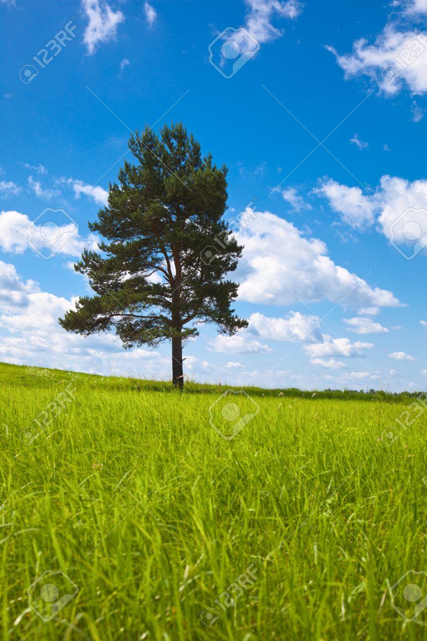 Alone Tree In Field Under Blue Sky.Vertical Orientation Stock ...