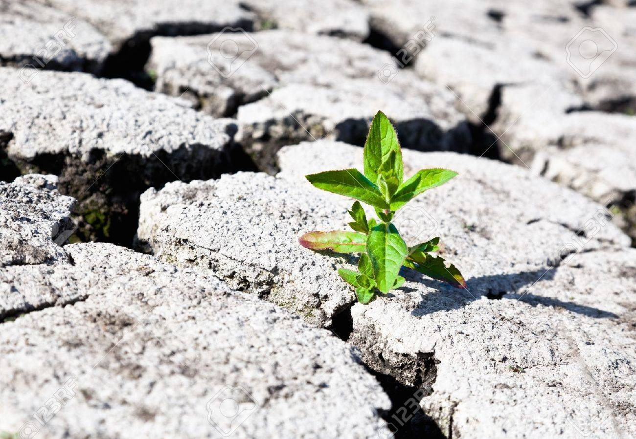 land with dry cracked ground Stock Photo - 9978114