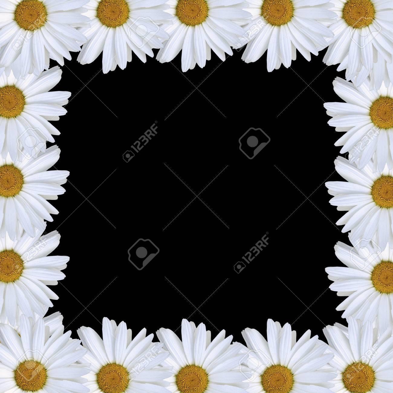 daisy border Stock Vector - 7119849