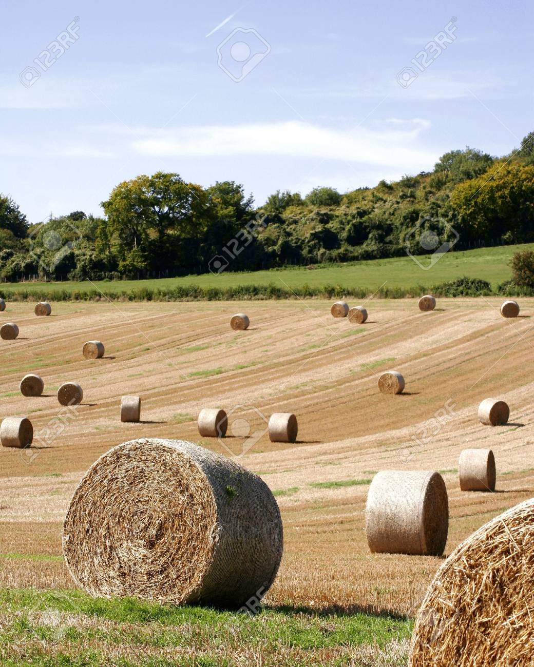 hay bales in field Stock Photo - 767610