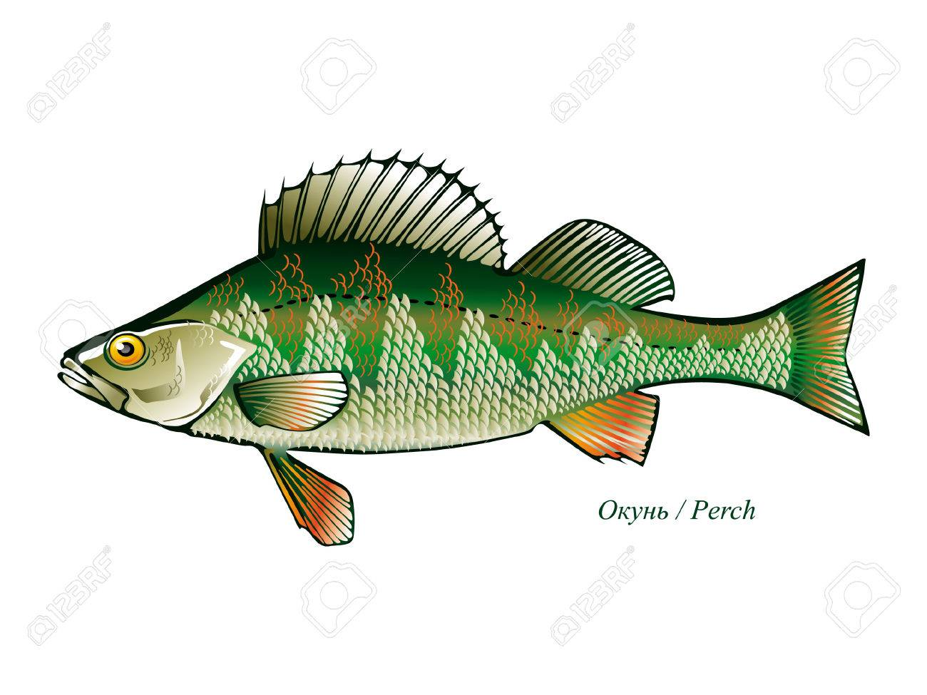 9,172 Freshwater Stock Vector Illustration And Royalty Free ...