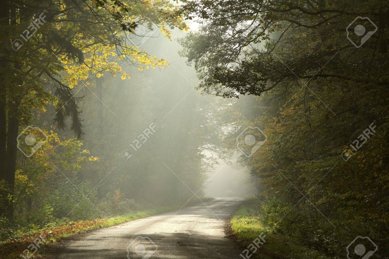 Lane running through the autumn deciduous forest at dawn Stock Photo - 14824689