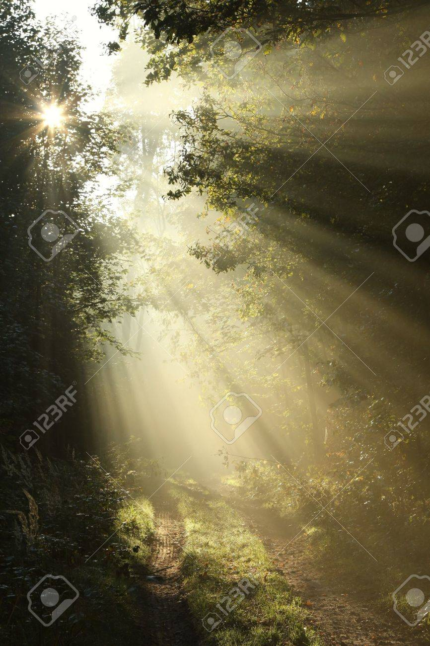 Dirt road in deciduous forest on a foggy September morning Stock Photo - 14824682