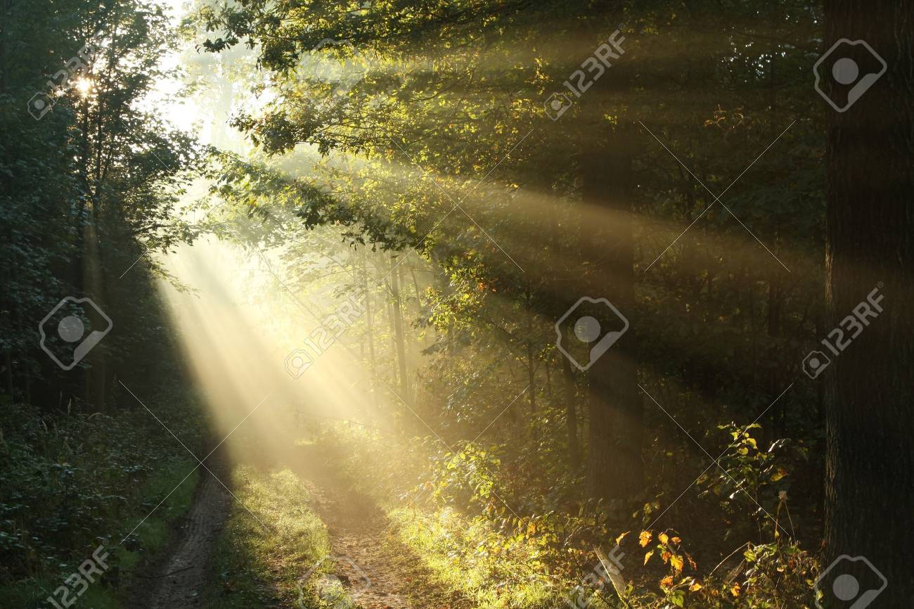 Sunlight falling on the path in the autumn forest on a foggy morning Stock Photo - 15183211