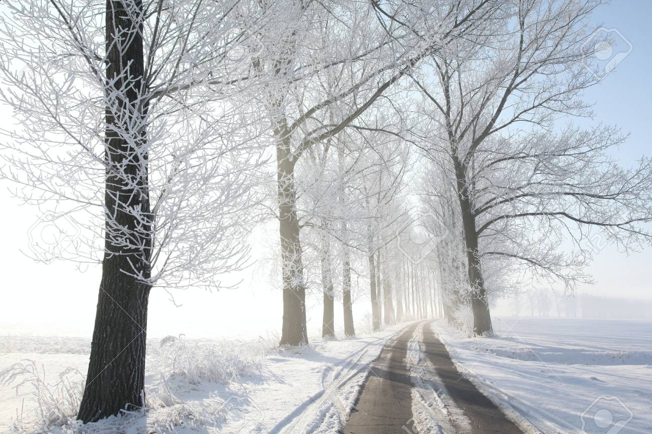 Winter rural road among frosted trees lit by the morning sun Stock Photo - 15183264