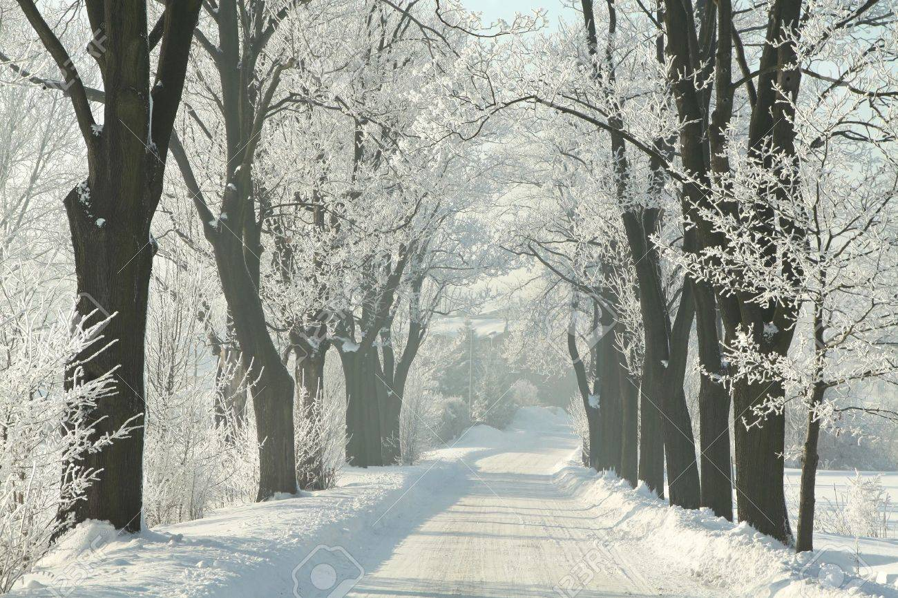 Winter country road among frosted maple trees on a sunny morning Stock Photo - 15183236
