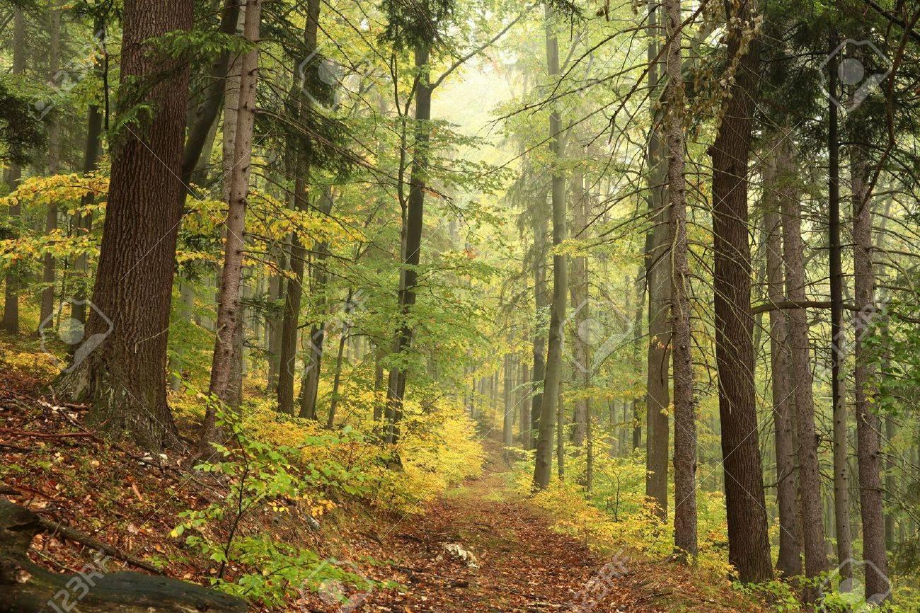 [Chemins secrets] Beorn / Arwen / Bifur 47009333-sentier-de-la-for%C3%AAt-en-automne-paysages-au-d%C3%A9but-octobre