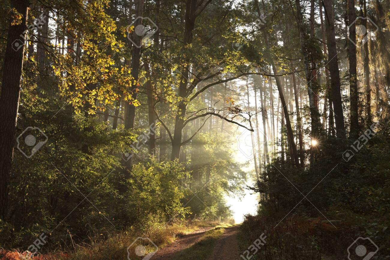 Trail through an autumn forest on a misty sunny morning - 130894651