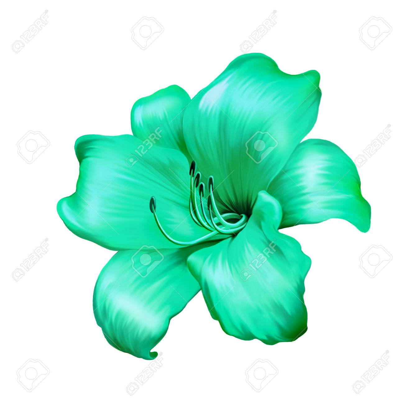 Blue lily flower images illustration of green blue lily flower isolated on white background stock illustration izmirmasajfo Gallery