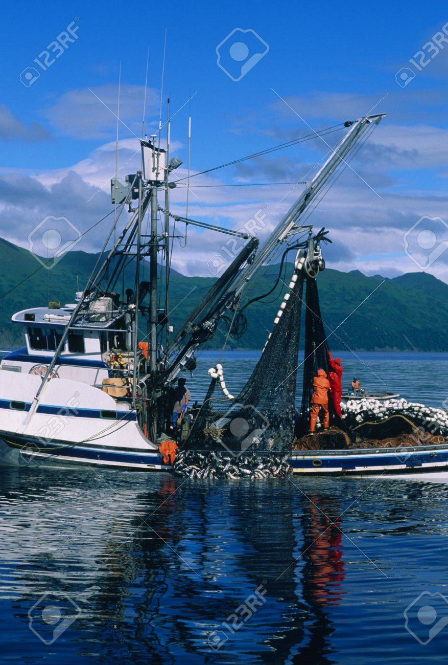 Pulling in a Load of Salmon in Alaska Stock Photo - 6323785