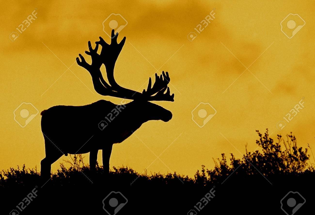 Caribou Silhouette - 7672209