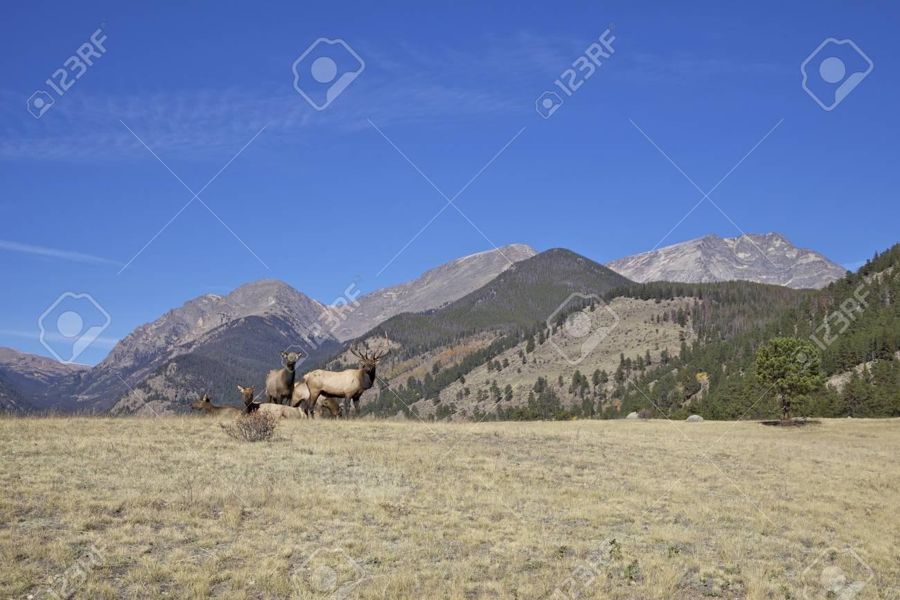 Elk Herd in Mountain Landscape Stock Photo - 16514937
