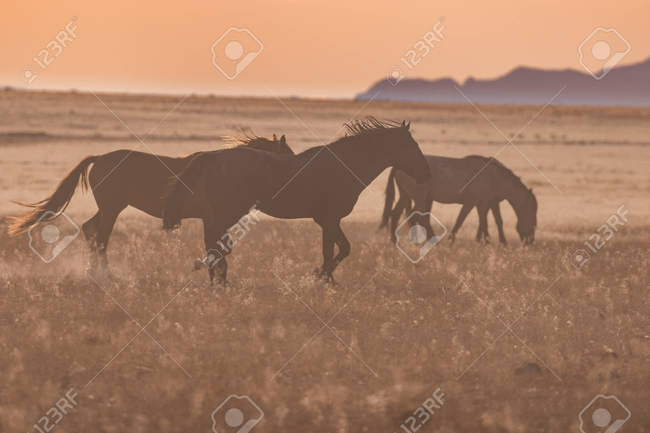 Wild Horses Running At Sunset Stock Photo Picture And Royalty Free Image Image 90964449