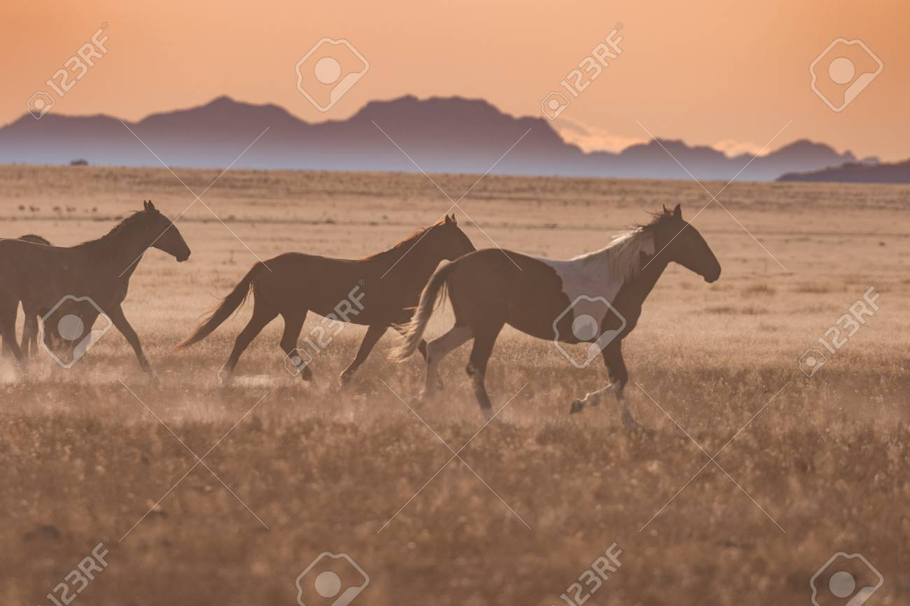 Wild Horses Running At Sunset Stock Photo Picture And Royalty Free Image Image 89880687