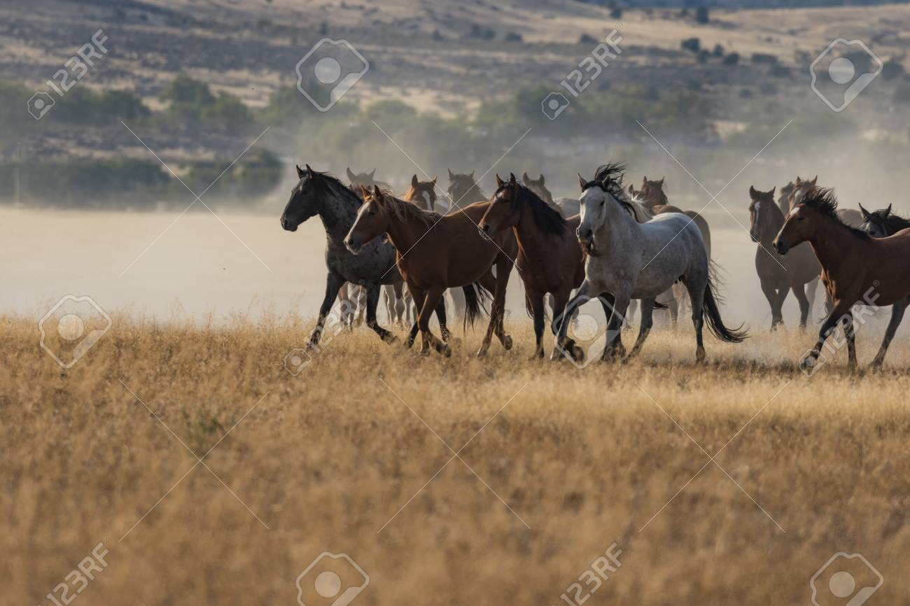 Herd Of Wild Horses Running Stock Photo Picture And Royalty Free Image Image 89866641