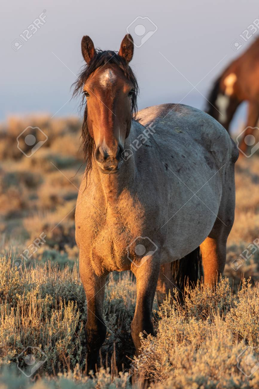 Beautiful Wild Horse Stock Photo Picture And Royalty Free Image Image 108366905