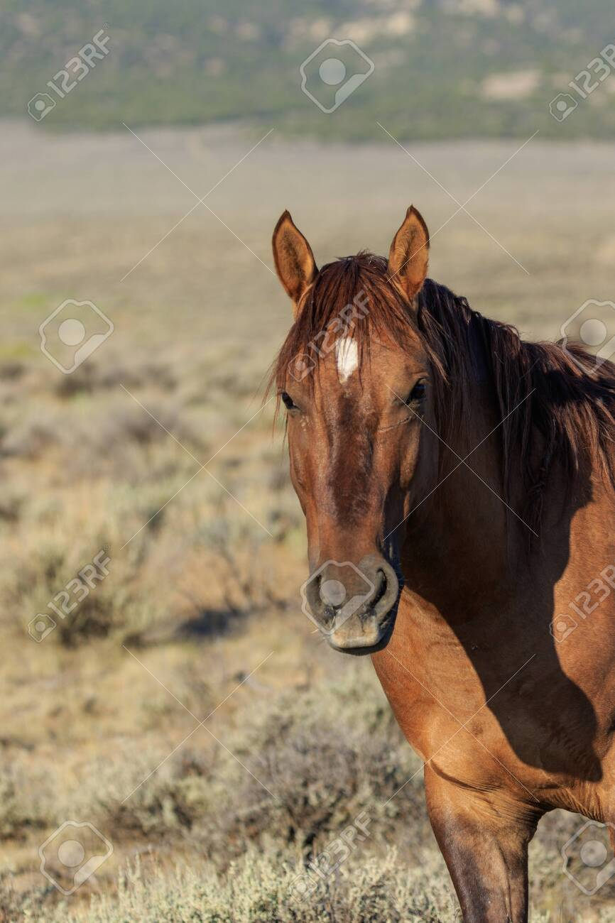 Beautiful Wild Horse Stock Photo Picture And Royalty Free Image Image 108366911