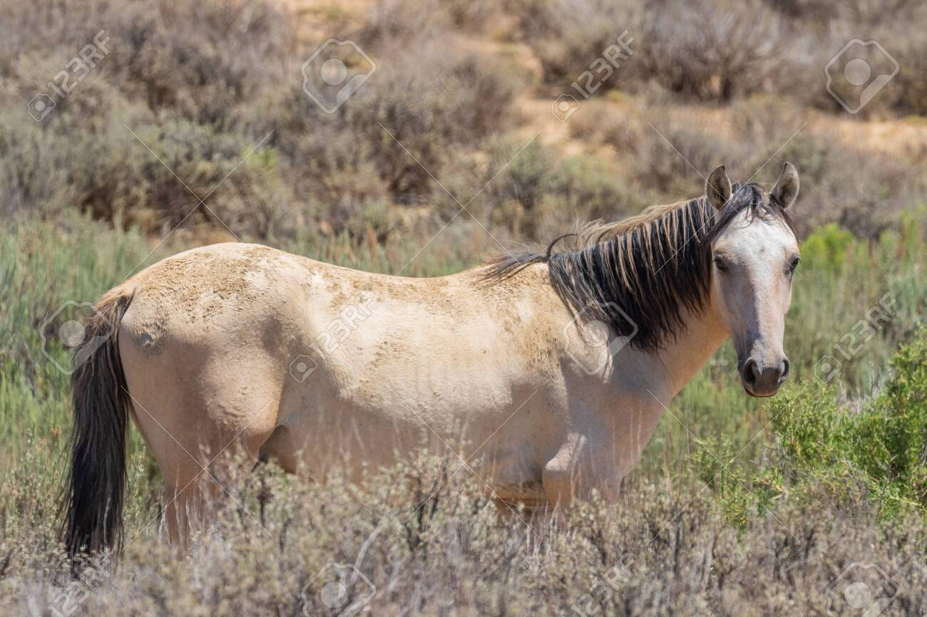 Beautiful Wild Horse Stock Photo Picture And Royalty Free Image Image 110698673