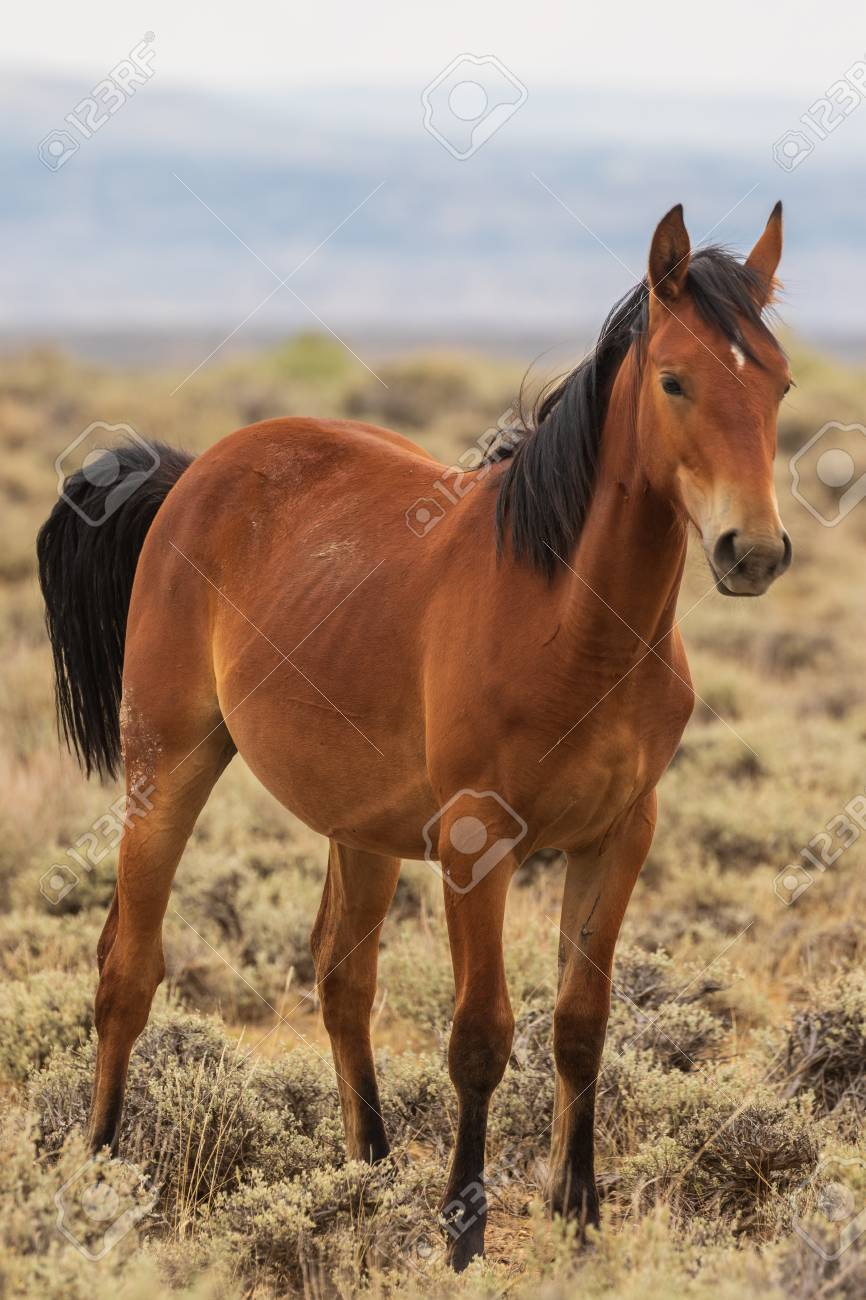 Beautiful Wild Horse Stock Photo Picture And Royalty Free Image Image 110698680