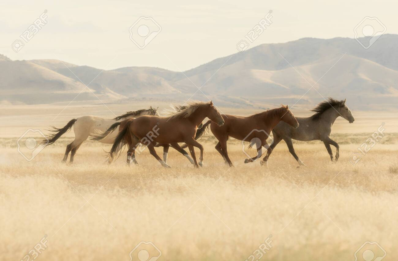 Wild Horses Running In The Desert Stock Photo Picture And Royalty Free Image Image 124361848