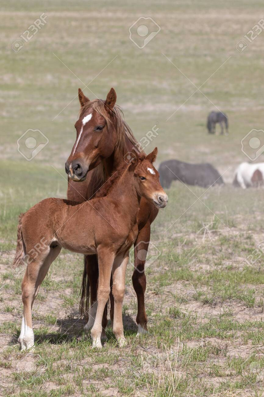 Wild Horse Mare and Foal - 128057316