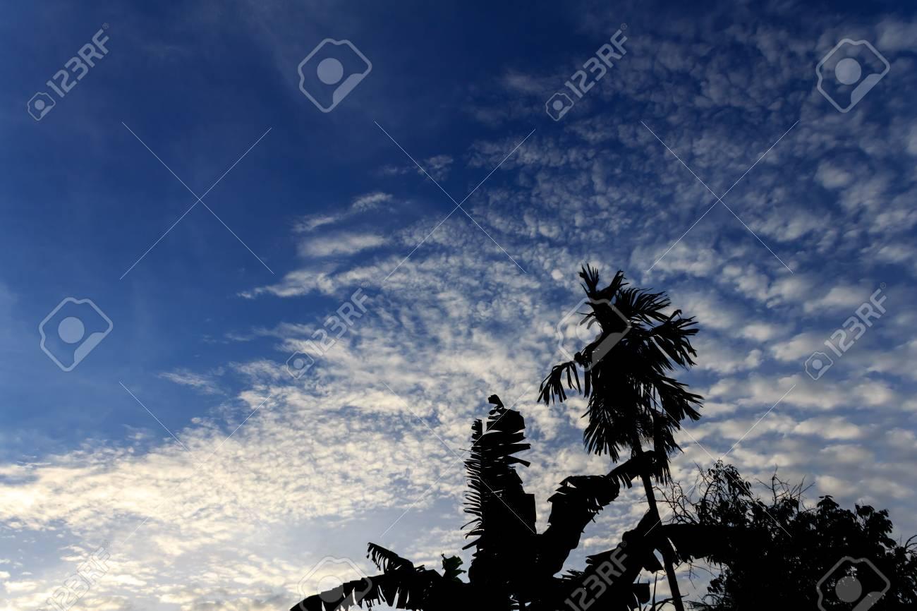 Silhouette tree Stock Photo - 20892473