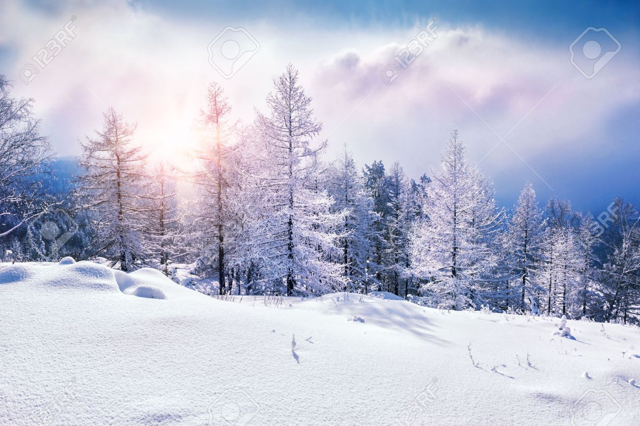Snow covered trees in the mountains at sunset. Beautiful winter landscape. Winter forest. Creative toning effect - 45113396