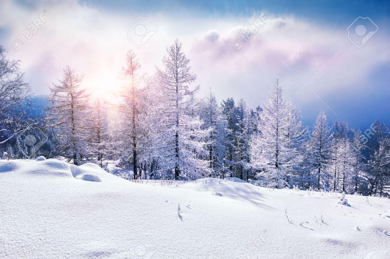 https://previews.123rf.com/images/naturestudio/naturestudio1509/naturestudio150900002/45113396-snow-covered-trees-in-the-mountains-at-sunset-beautiful-winter-landscape-winter-forest-creative-toni.jpg