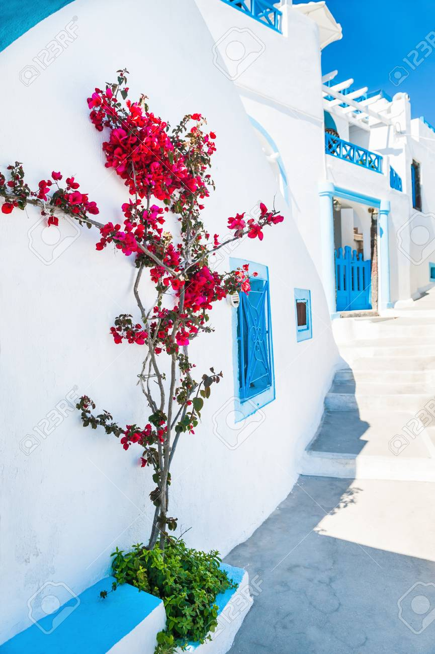 11f32d7434d8 Stock Photo - White architecture and flowers on the street. Santorini  island