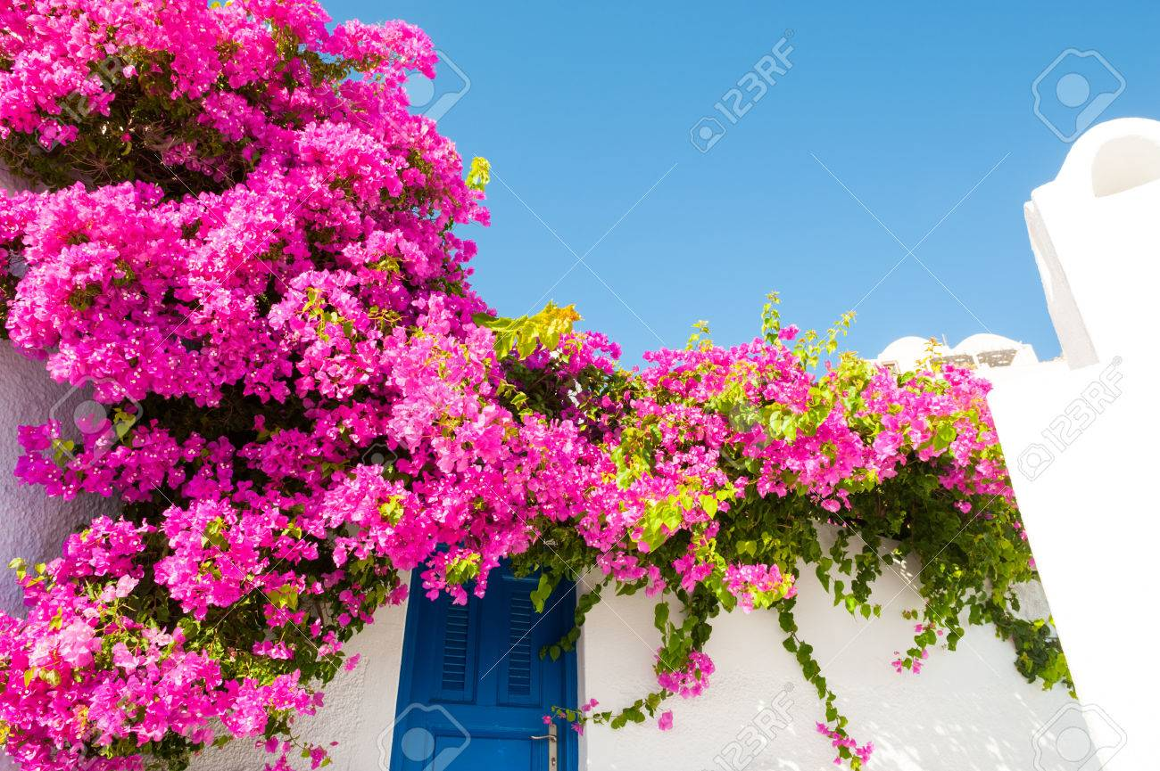 00cf73b743f8 Stock Photo - White-blue architecture and pink flowers