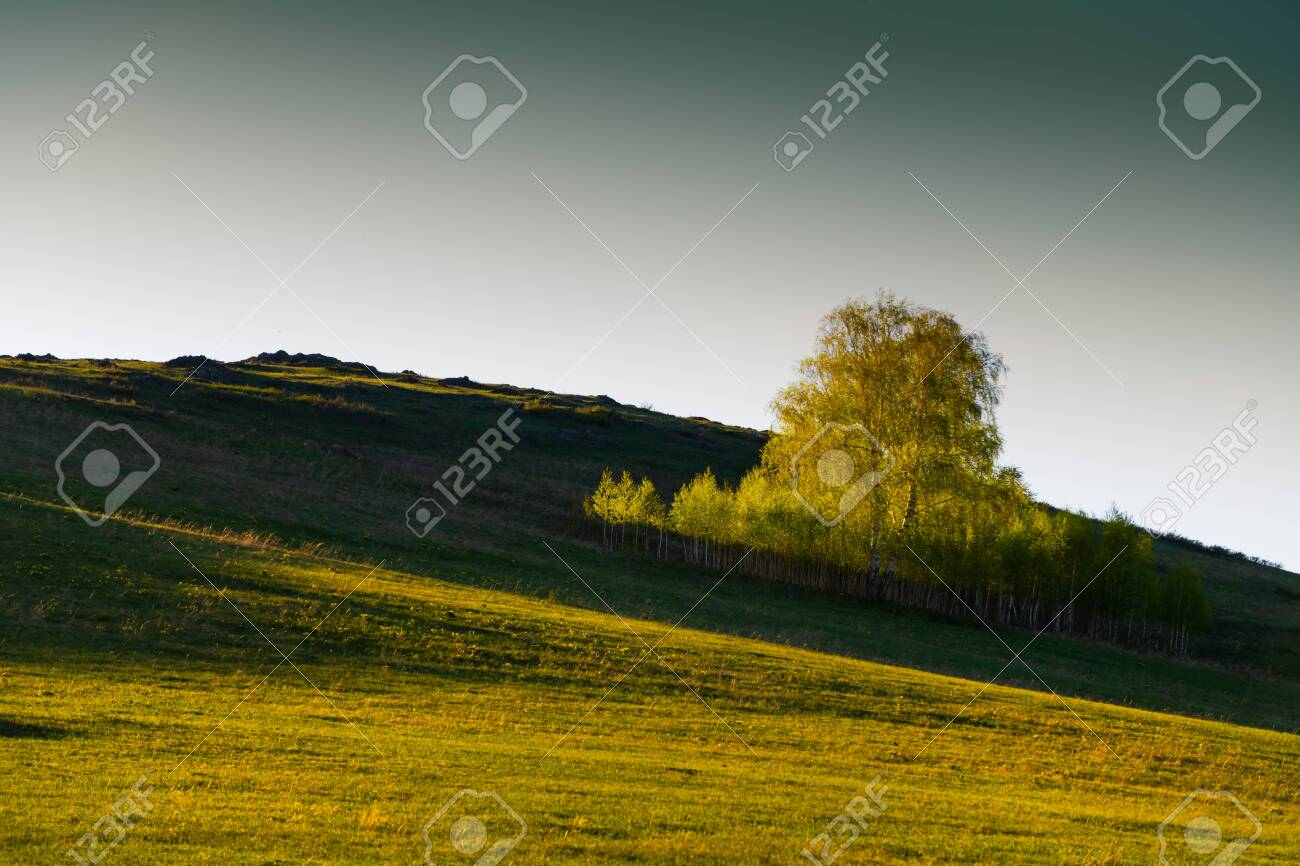 Green birch trees on the hills with fresh green grass at sunset. Beautiful summer landscape. South Ural, Russia - 147837043
