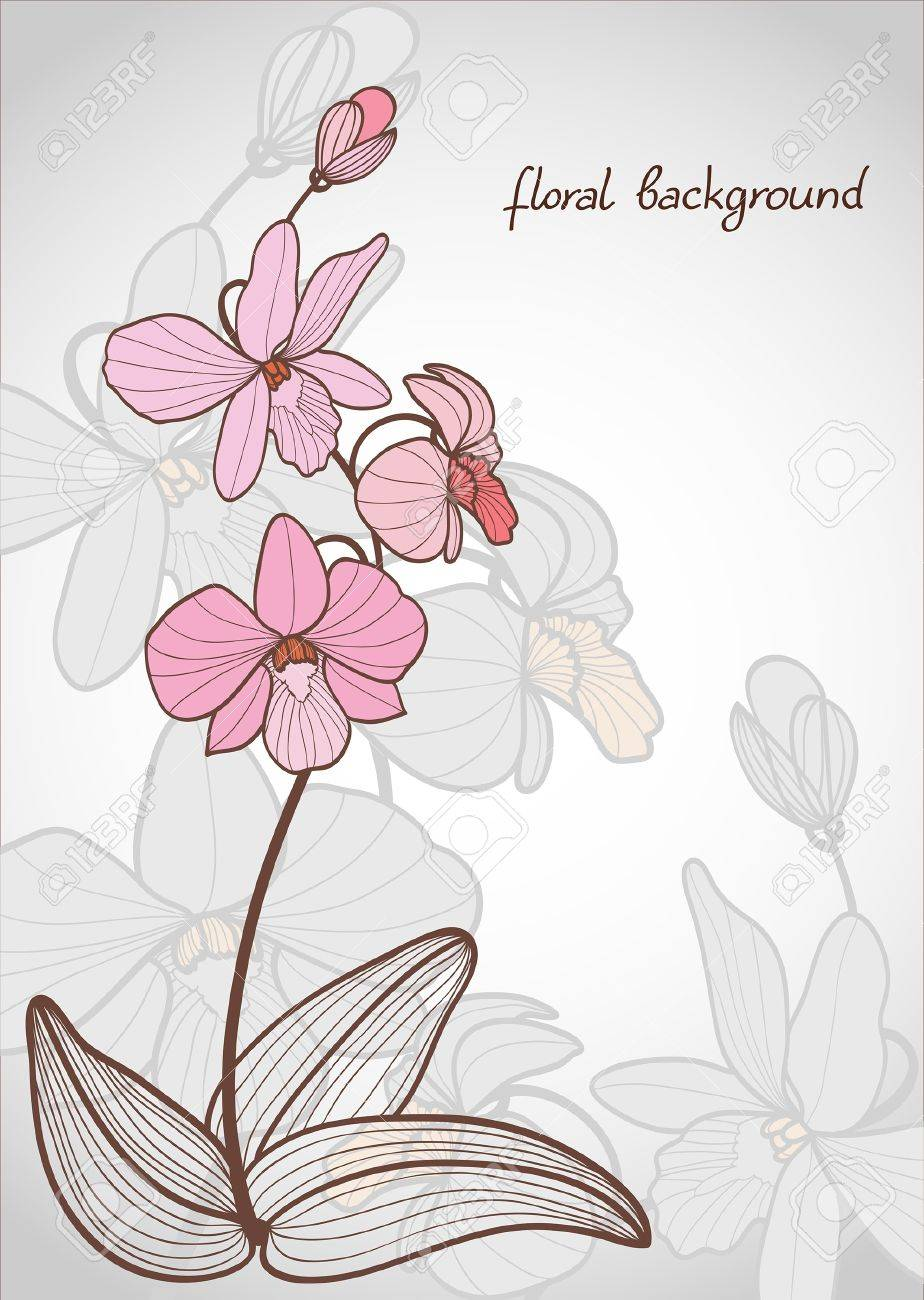 Summer vector with bloom pink orchid on a gray background Stock Vector - 10673799