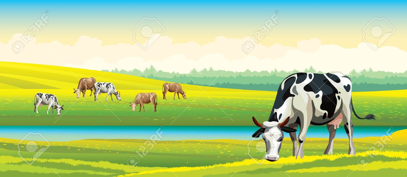 Herd of cows in green field on a cloudy sky. Vector rural landscape. - 40933357