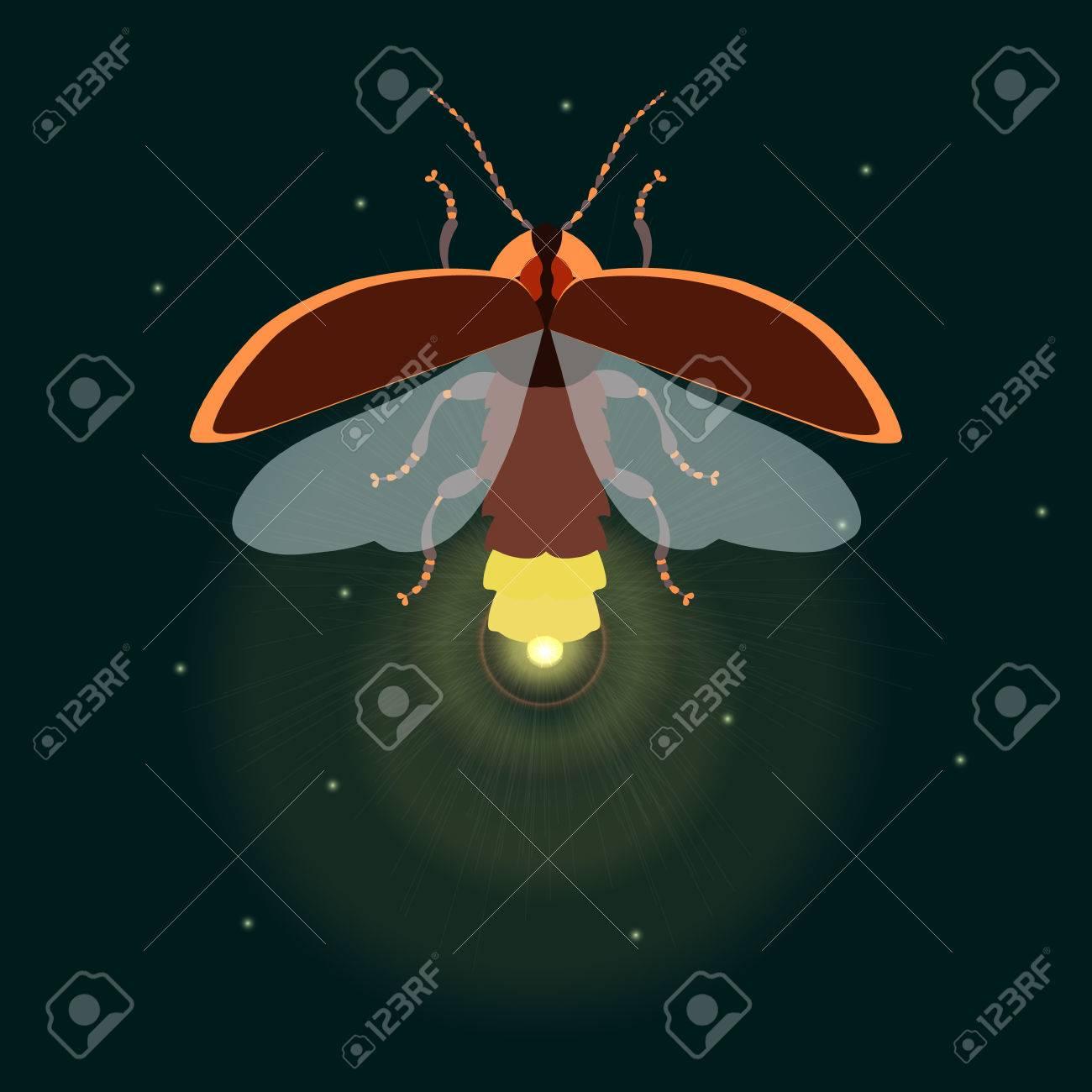 Luciérnaga Plantilla De Diseño Del Insecto. Luciérnaga. Volar ...