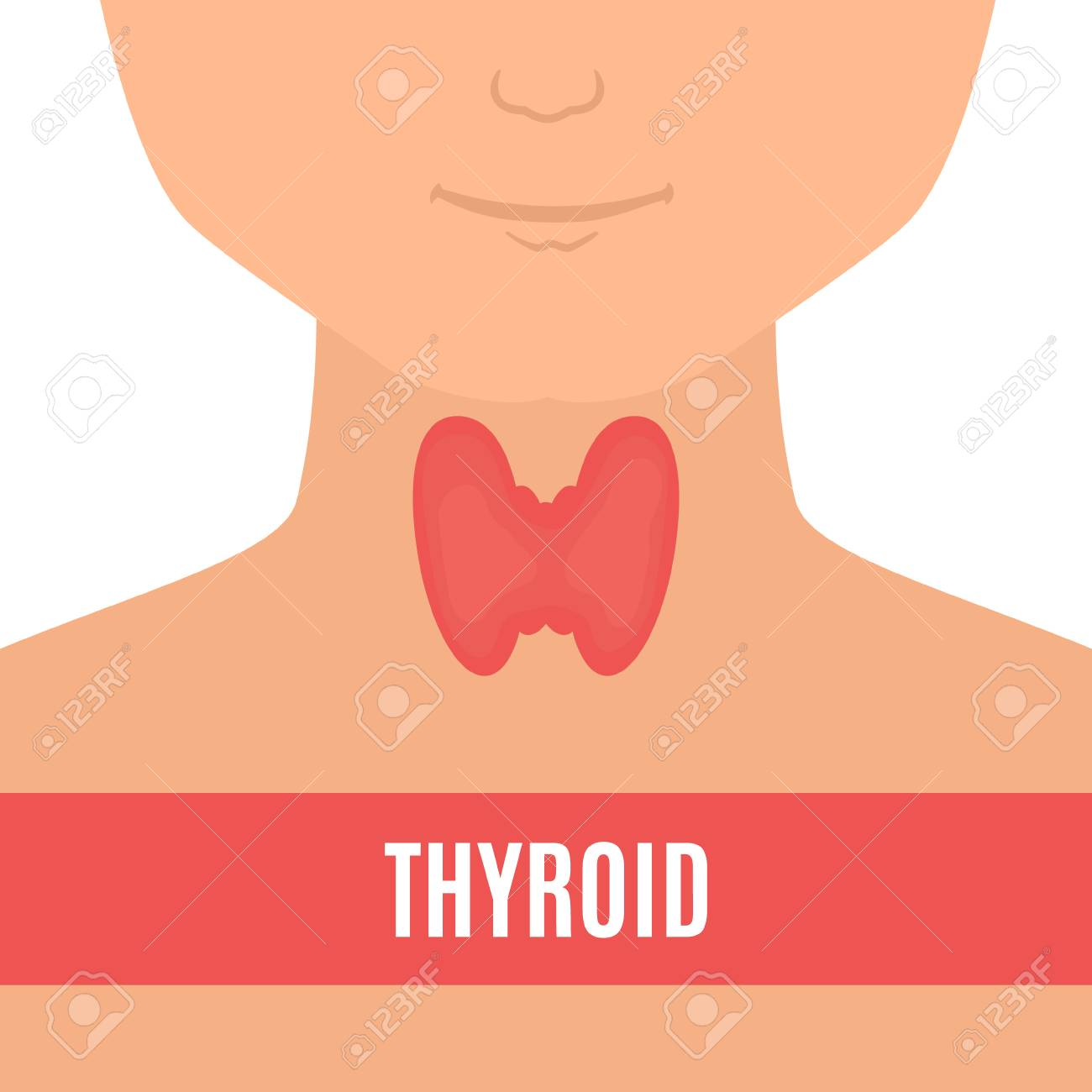 Thyroid Gland On A Silhouette Of A Man Body Anatomy Sign Human