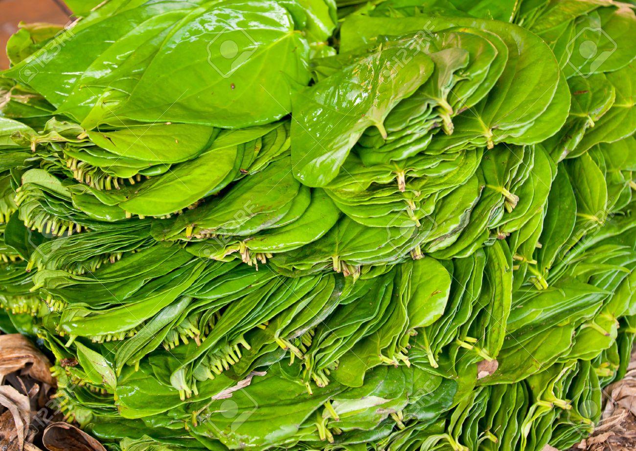Piper betle leaf க்கான பட முடிவு