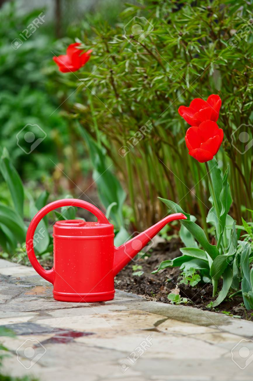Red watering can on a garden alley Stock Photo - 13590814